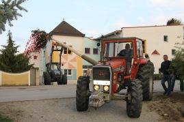 """Das erfahrene """"Maibaumteam"""" Anton Eigner und Leopold Herzog transportieren den Maibaum mit ihren Traktoren und setzten ihn in das vorbereitete Loch gegenüber dem Kindergarten."""